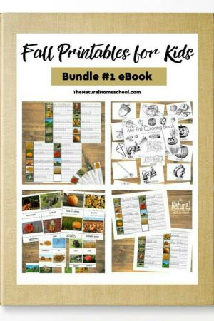 Fall And Winter Activities For Kids The Natural Homeschool