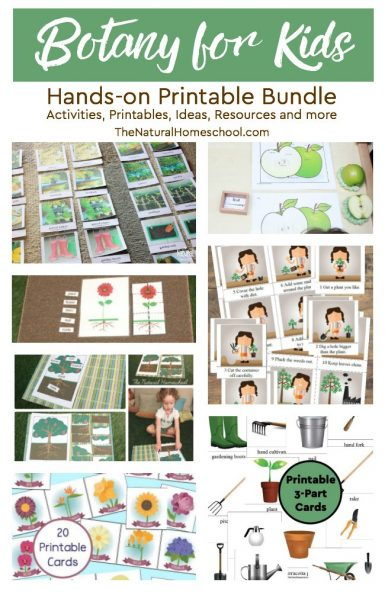 Botany for Kids Printable Bundle {Activities, Printables, Ideas, Resources and more}