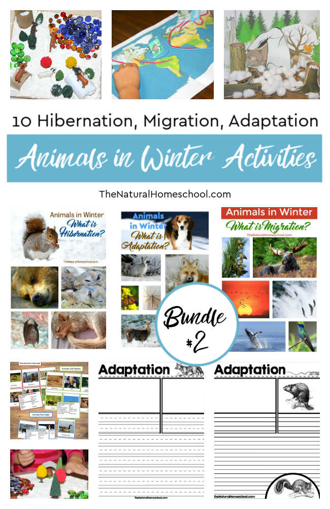 Animals in Winter Bundle #2 (Hibernation, Migration, Adaptation)