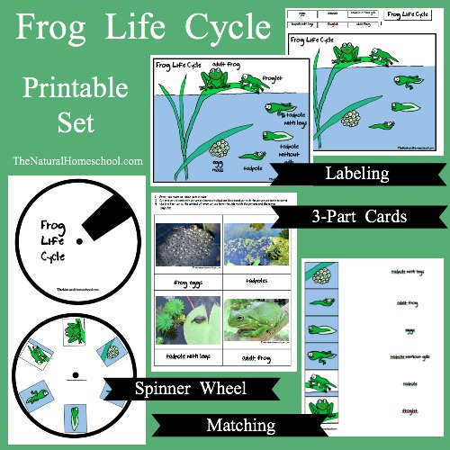 If you have been looking for a set of activities having to do with the life cycle of a frog for kids, then this is a great one for you to look at!