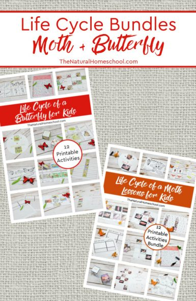 Life Cycle of a Butterfly and Moth for Kids ~ 24 Printable Activities Bundles